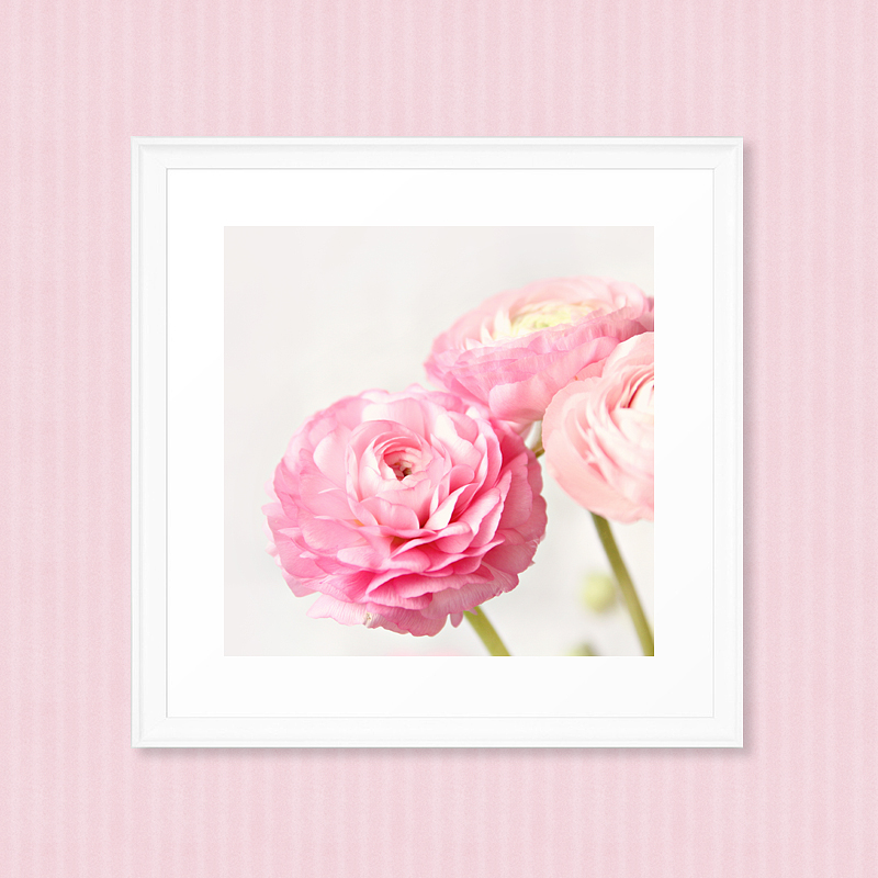 the meaning  symbolism of ranunculus  inspirations, Natural flower