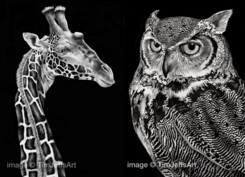 00-Tim-Jeffs-All-Creatures-Great-and-Small-Ink-Drawings-www-designstack-co
