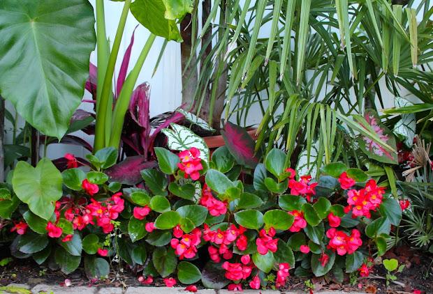tropical gardening in york