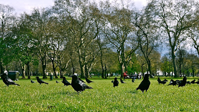 Murder on Clapham Common - the nicest residents are crows