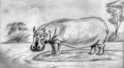 Sketch of a Hippopotamus
