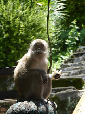 mono salvaje en las batu caves