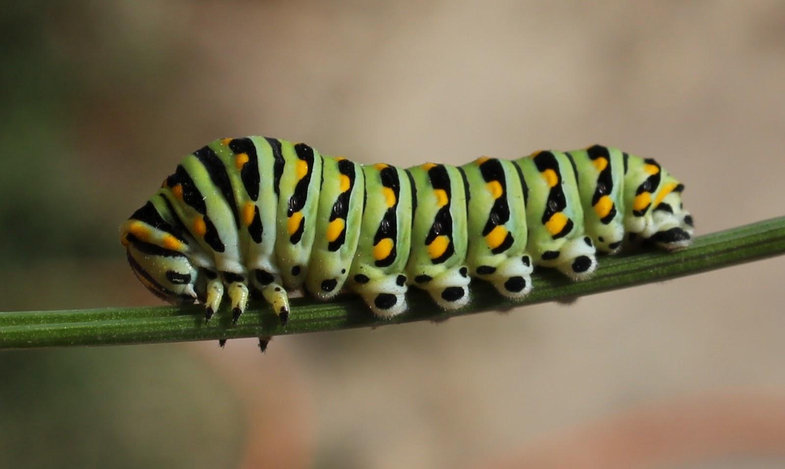 search results for caterpillar bioinformatics r u0026d
