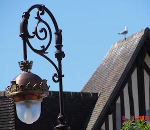 A lâmpada e a gaivota