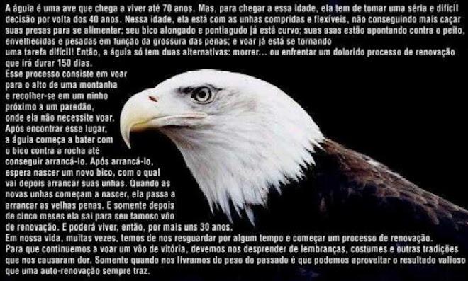 Meu pensamento é o vôo da águia
