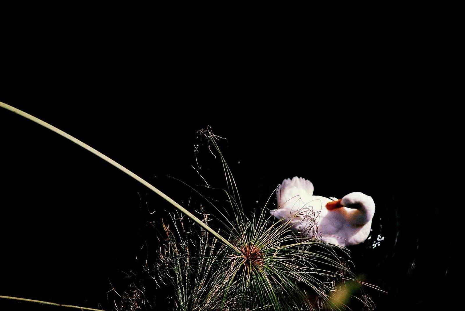 Naumachie solitarie - Poesie