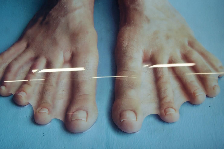 webbed toes | rtg sunderland message boards, Skeleton
