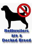 Rottweilers Are A Docked Breed!