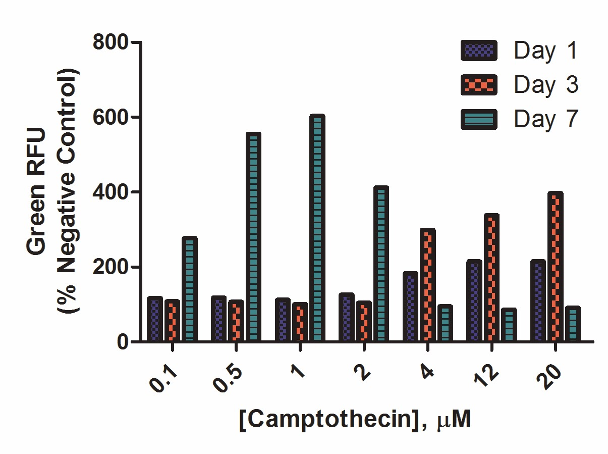 Figure 1.  Hepatotoxicity results following 1, 3, and 7 day camptothecin treatments.