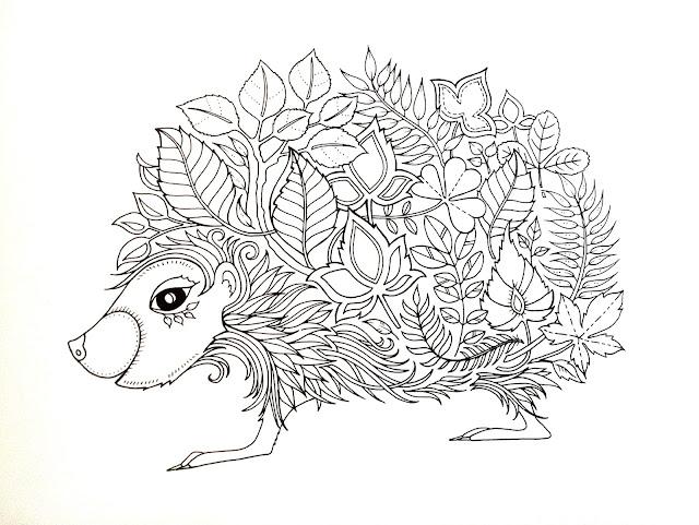 sün hedgehog