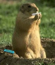 funny animal picture  rolling tobacco