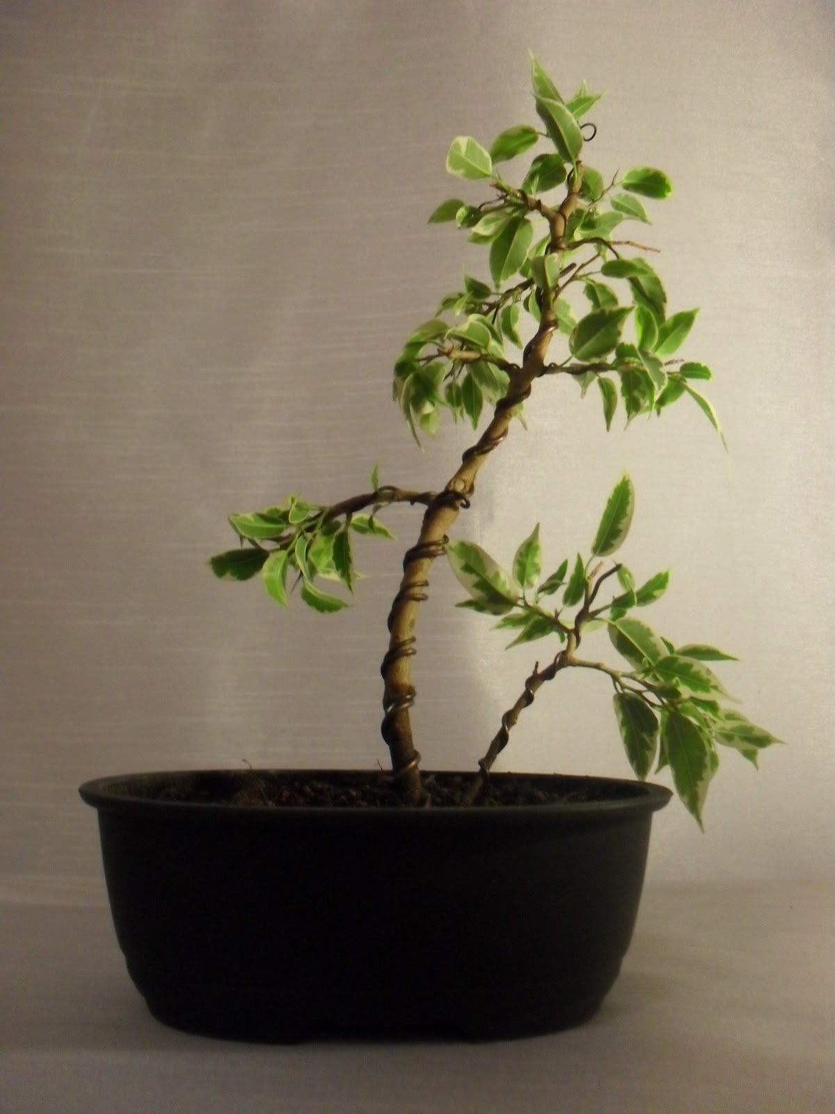 IT39S A BONSAI Den Nya Bloggen