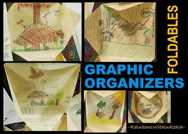 photo: Graphic Organizer/Foldable Reports (via RainbowsWithinReach Foldable RoundUP) 