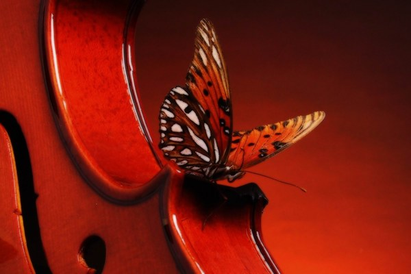 Brown Violin and Butterfly Images HD