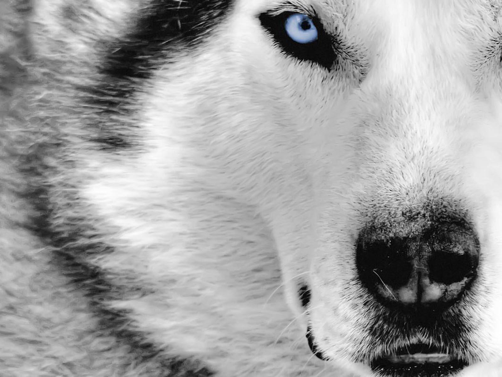 http://4.bp.blogspot.com/-D_nsxaF5gAs/T2m0e5unDKI/AAAAAAAADWg/kZUSjJCNHE4/s1600/beautiful+dogs+wallpaper.jpg
