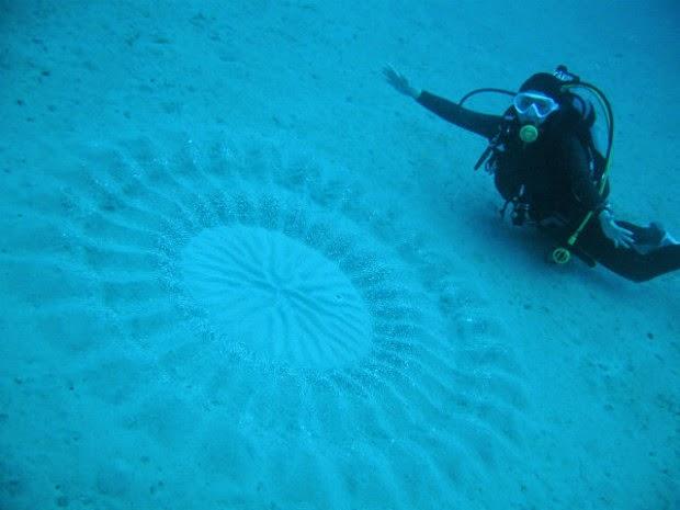 Феномен кругов на морском дне