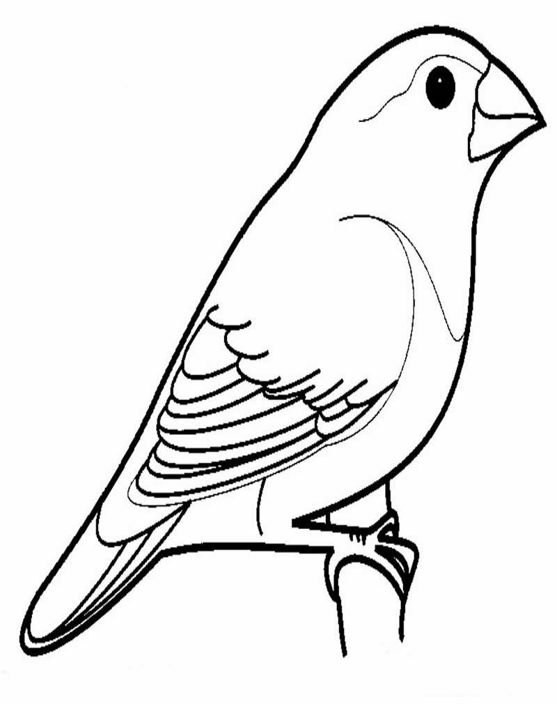 Mewarnai Gambar Burung Ayo Mewarnai