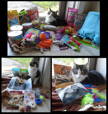 Anakin the two legged cat with presents!
