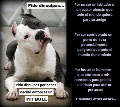 Ver Fotos de Perros Pitbull Rottweiler Boxer y Labradores