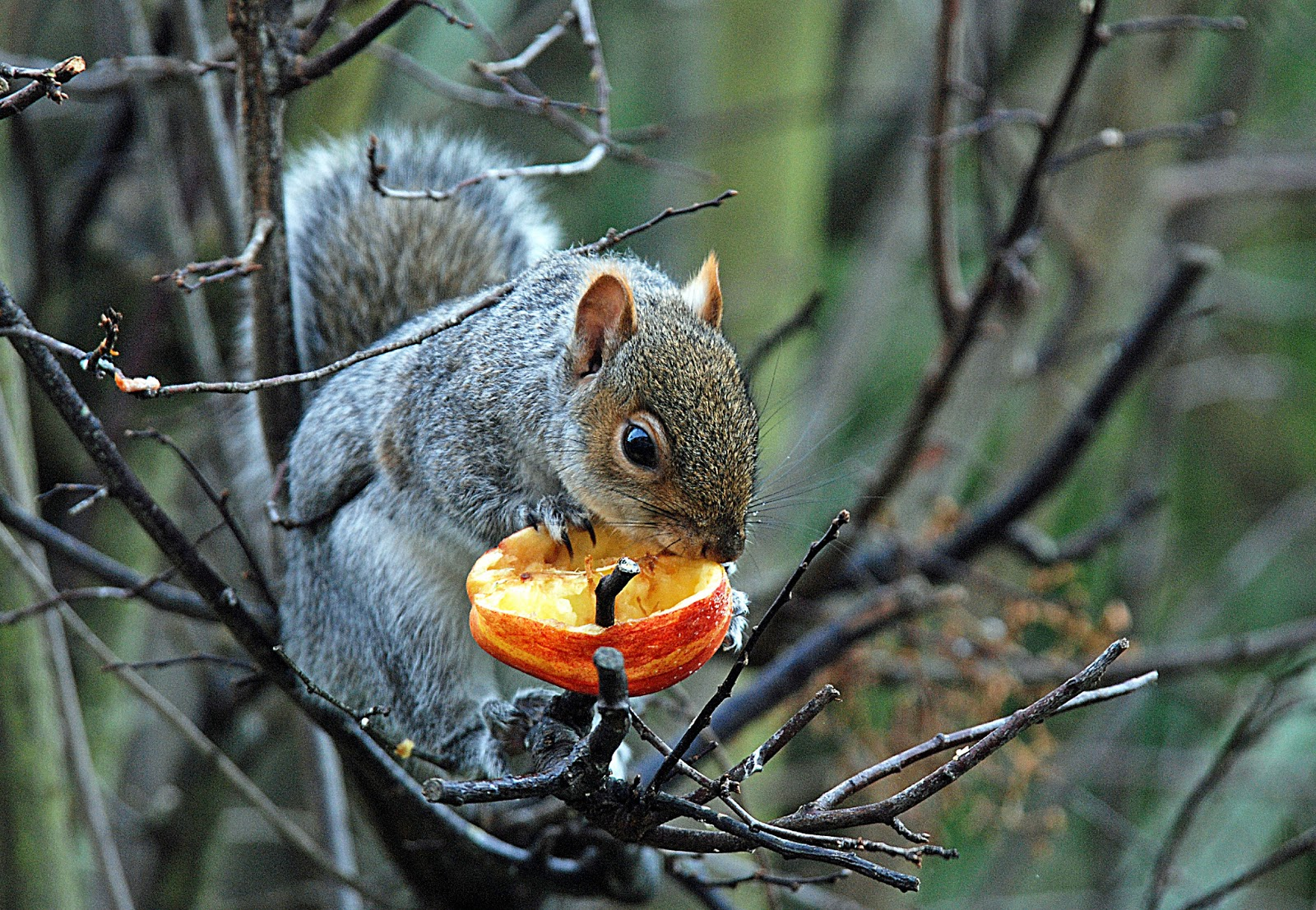squirrel gay personals Andrew bird's bowl of fire, squirrel nut  a total of 6 songs from the album have been released as singles as of august 2017 andrew bird toured in support of are .