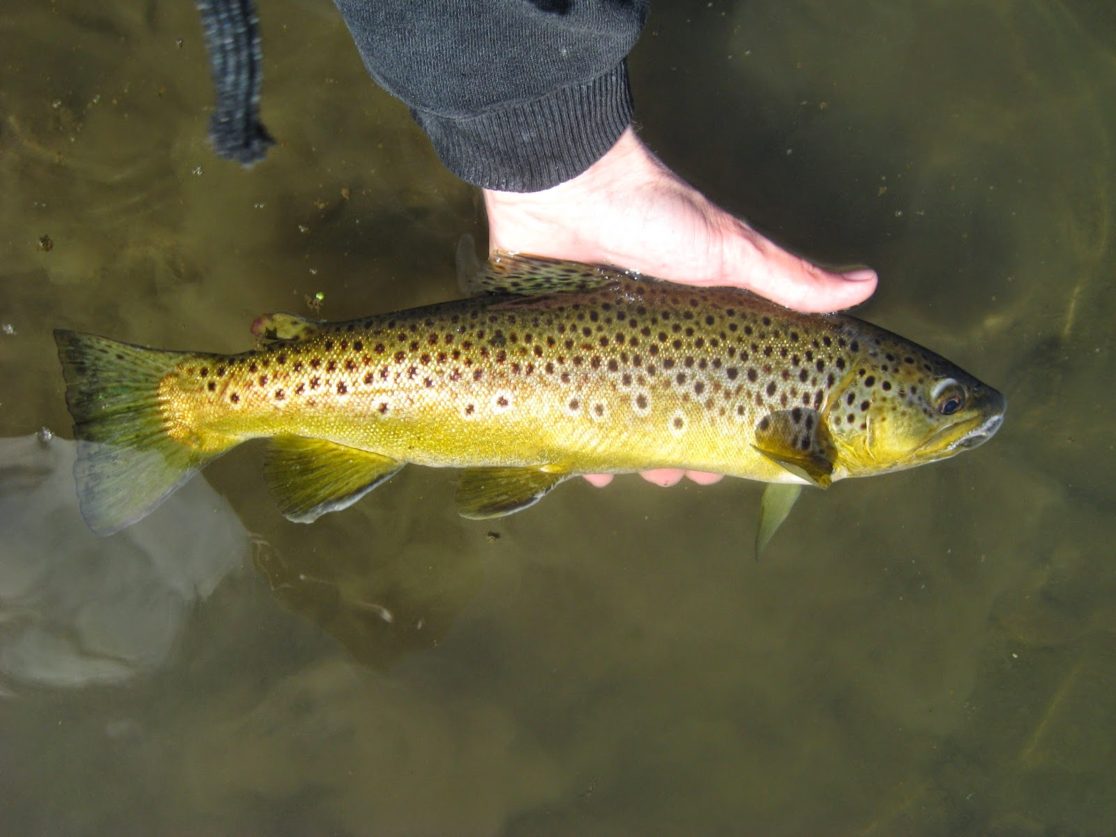 Minnesota driftless fly fishing trip report today was a for Is today a good day to fish