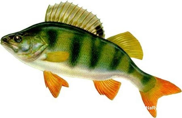 как клюет рыба под водой