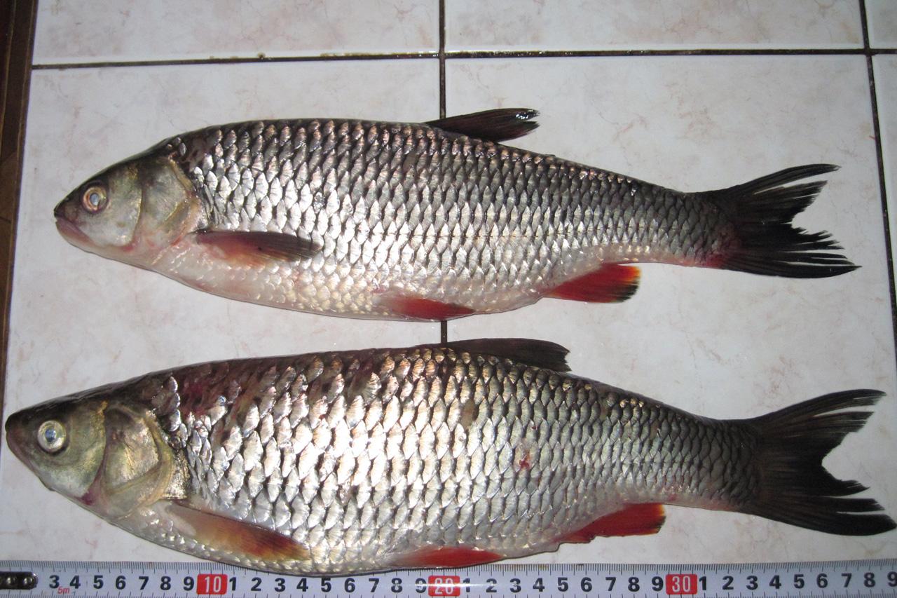 северский донец где можно ловить рыбу