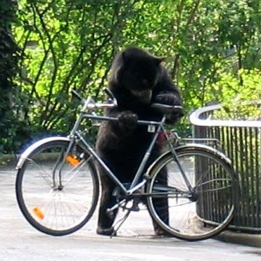 Regole di un buon ciclista urbano l 39 eco dell 39 ecologia for Permettono di riscaldare senza inquinare
