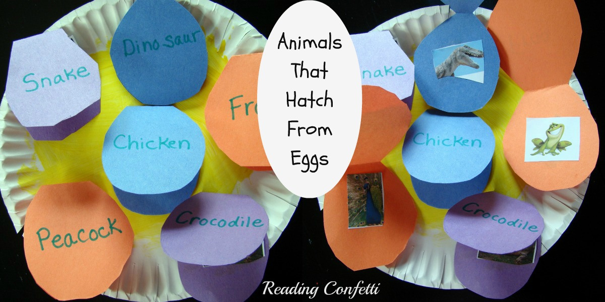 Animals That Hatch From Eggs Project ~ Reading Confetti