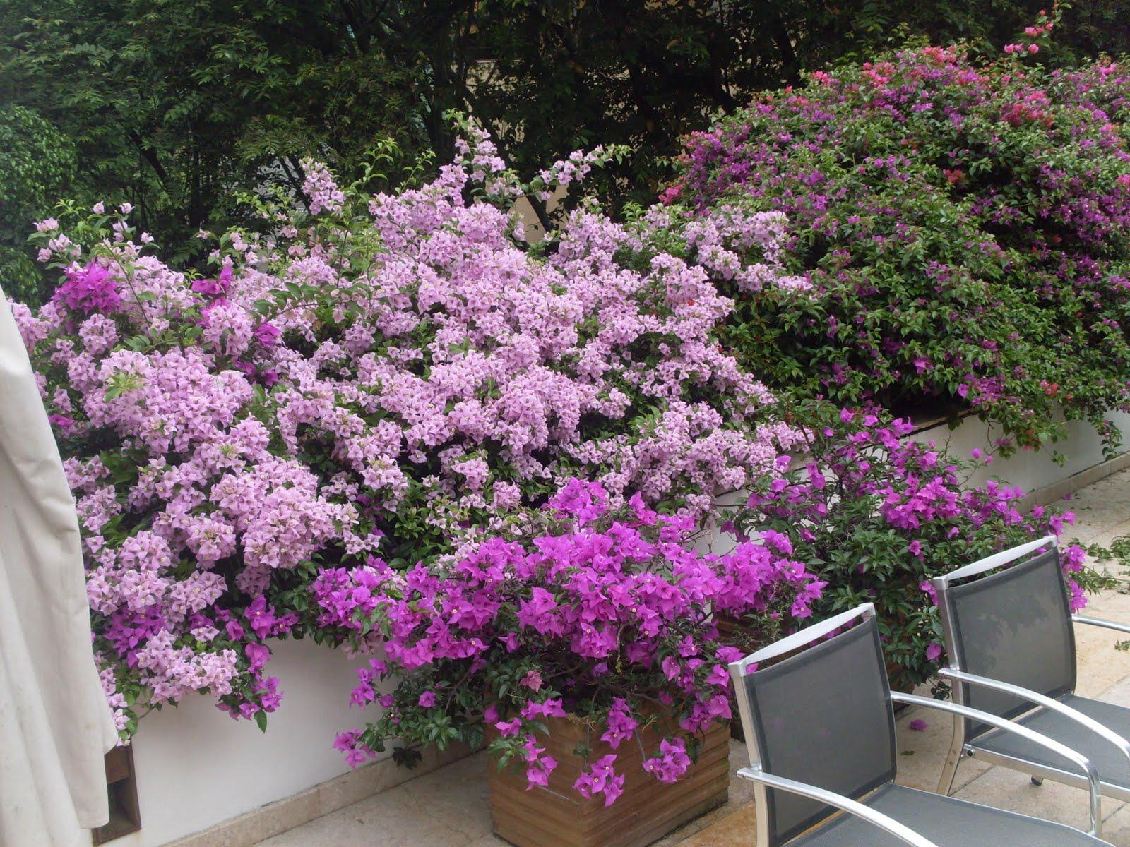 Lotos paisajismo medio ambiente mantenimiento de jardines for Mantenimiento de jardines