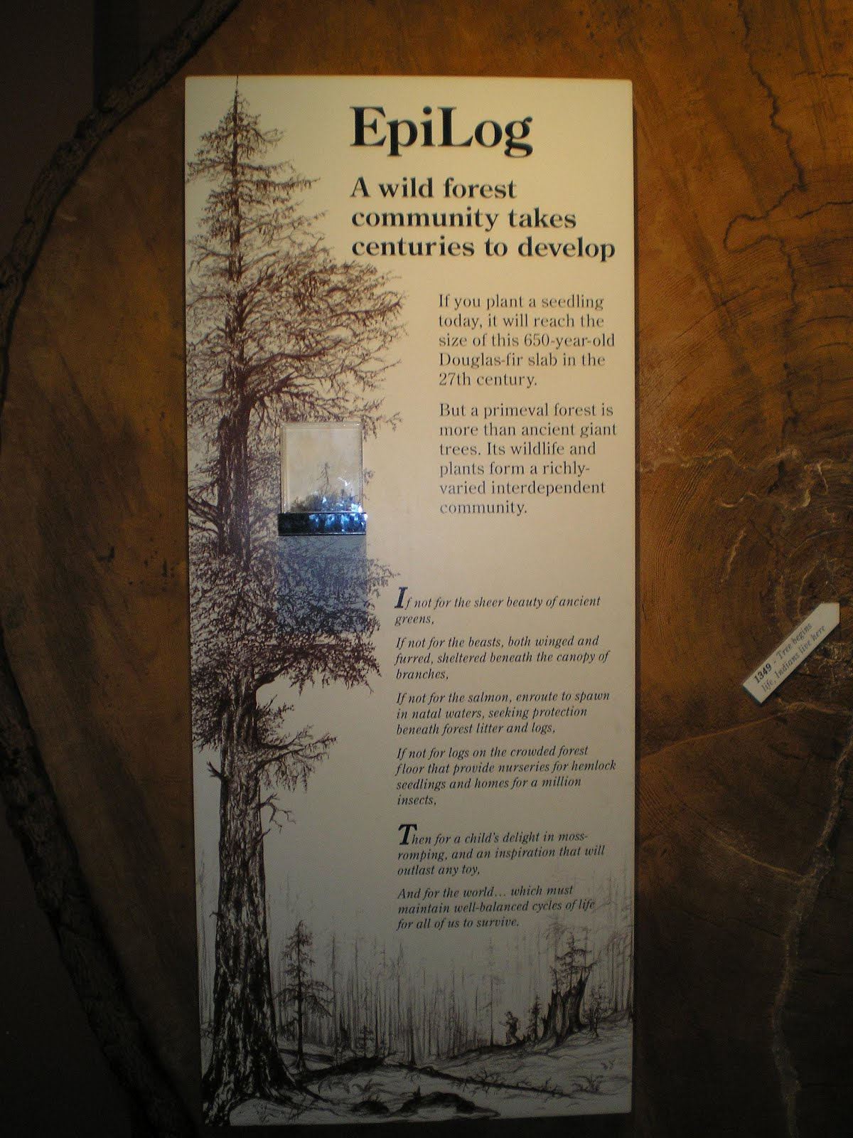 A king-sized Douglas fir log at the Hurricane Visitor Center in Olympic Natl Park. & The Road Genealogist: Selected Olympic Peninsula Photos
