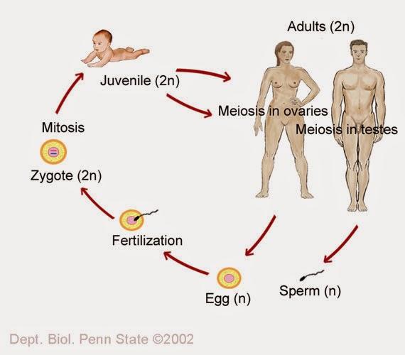 la vida sexual de los seres humanos: