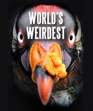 Những Sinh Vật Kì Lạ Nhất Trái Đất - Worlds Weirdest