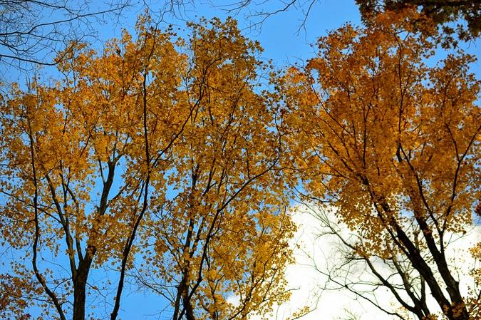 Fall foliage in Ontario, Canada