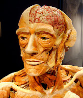 Body-Worlds-Man