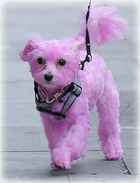 Perro de color Rosa tiene Emma Watson