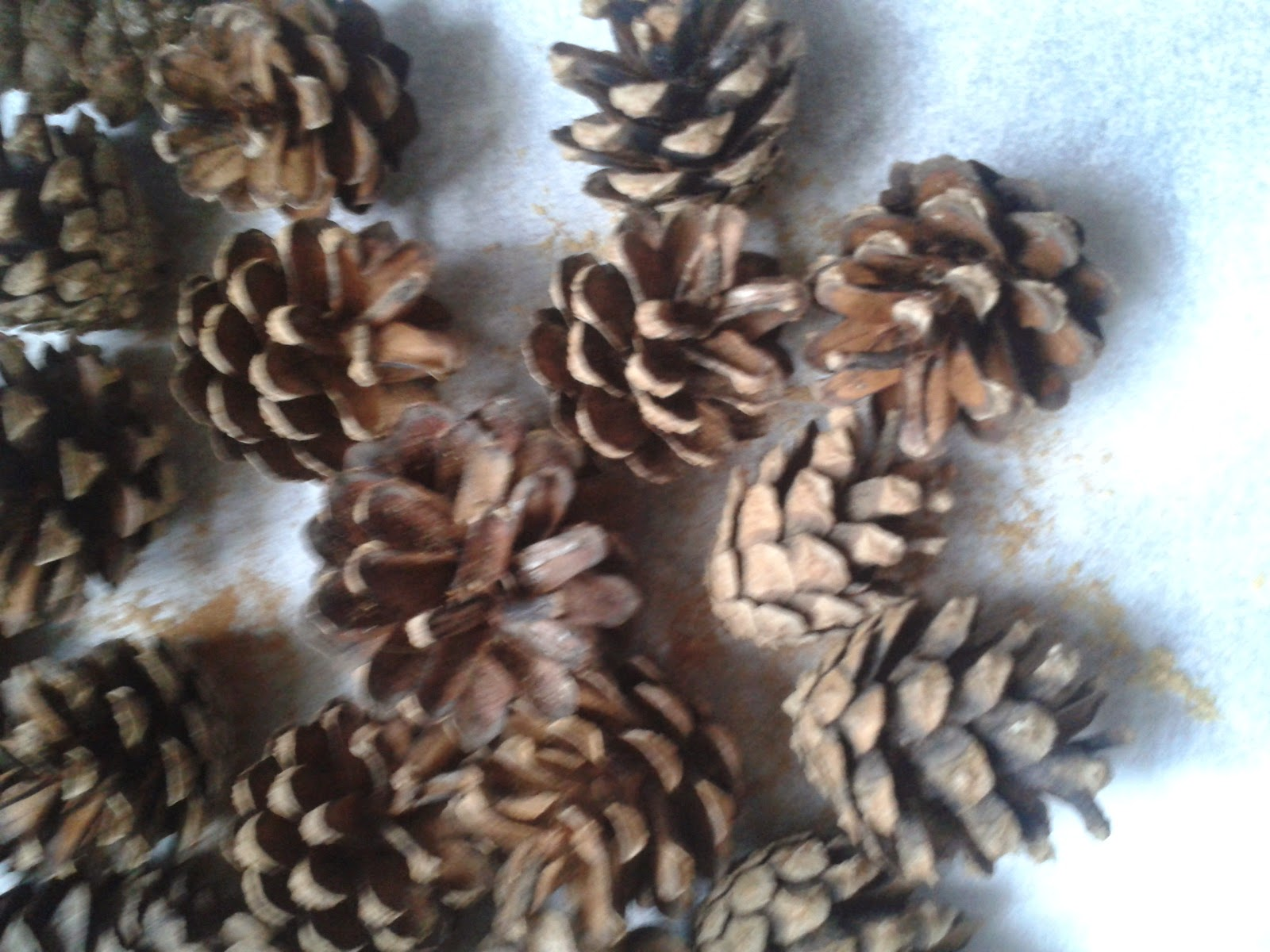 pot pouri pinecones