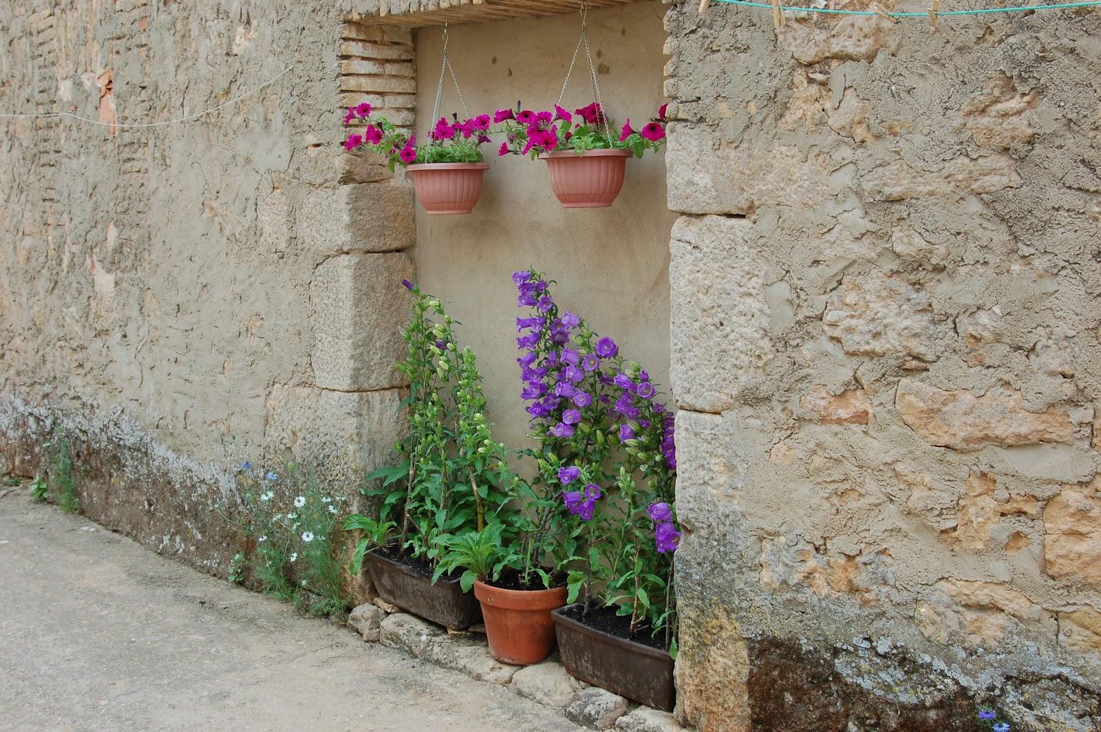 estn sembradas en una pequeas jardineras no tienen mucha tierra ni mucho sol pero ah estn preciosas