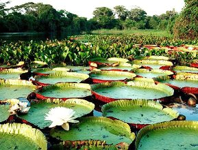 Wikiflora' vai mapear biodiversidade na Amazônia