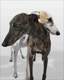 My Greyhound Blog