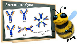 Quiz Time : Antibodies
