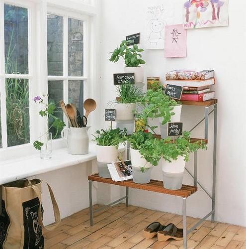 Um jardim para cuidar plantas dentro de casa for Indoor gardening pdf