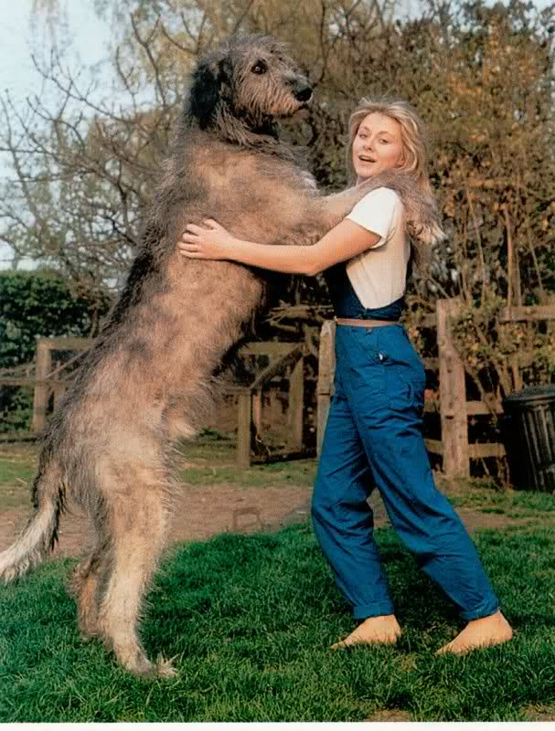 Huge Giant Dog Breed