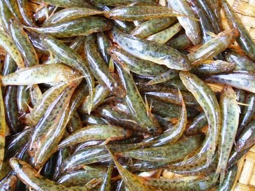 Cách làm cá bống kho tiêu thơm ngon đậm đà