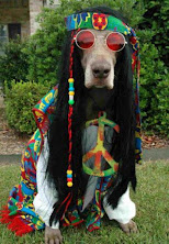 Cool Dog..'.yea he bad'