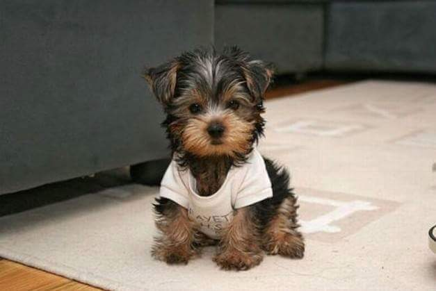 Dogs World And Encyclopedia Cutest Puppies Dog Wallpapers Images