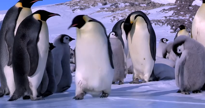 If You're Having A Bad Day, This Penguin-Filled Minute And A Half Will Have You Smiling Again.