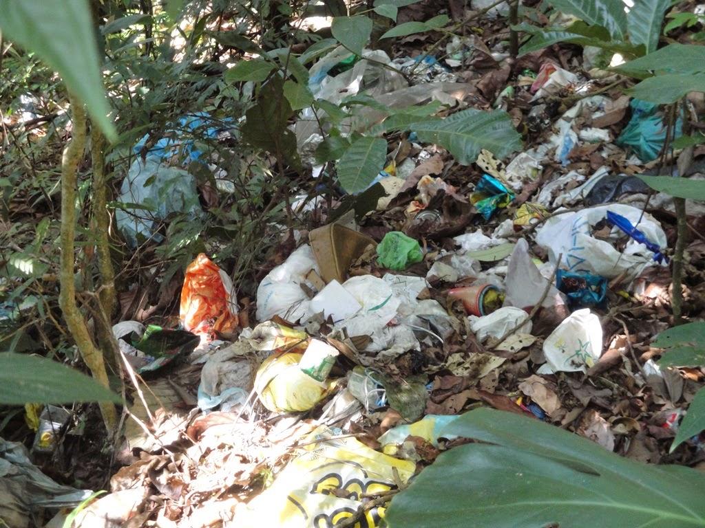 Destruição ambiental e falta de fiscalização pelas autoridades
