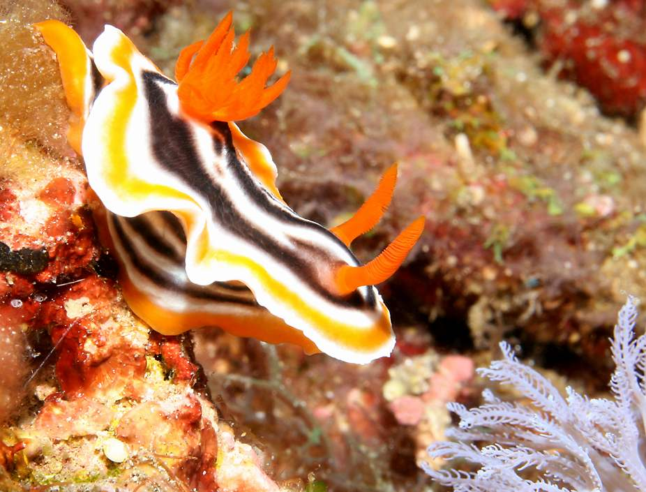 due to their motionless nature sea slugs are often very