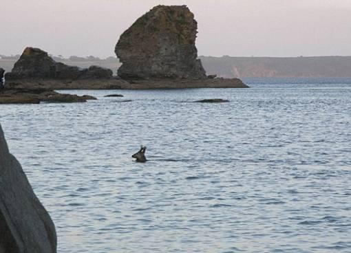 the facemash post - Rusa Jantan Berenang Sejauh 300 Meter Menyebrangi Teluk